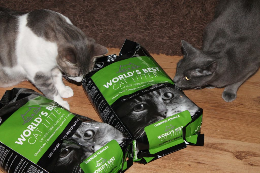 World's Best Cat Litter im Test
