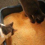 World's Best Cat Litter im Test