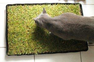 miau katzengras im test produkttests von uns f r euch. Black Bedroom Furniture Sets. Home Design Ideas