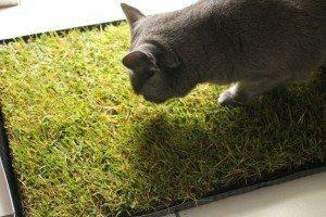 Miau Katzengras