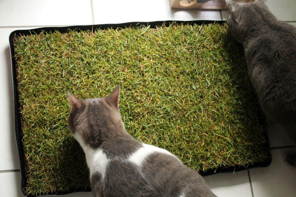 MIAU Katzengras im Test