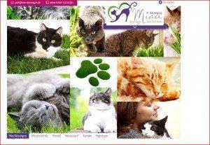 Miau Katzengras Startseite