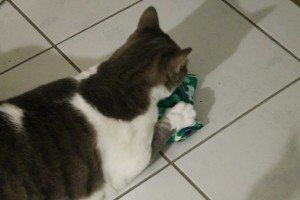 4cats Katzenspielzeug (22)