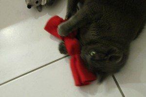 4cats Katzenspielzeug (26)