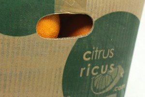 CitrusRicus Orangen aus Valencia (6)