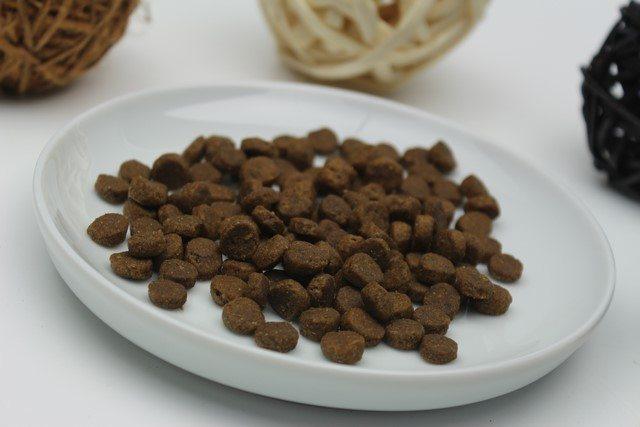 SALiNGO Katzenfutter im Test