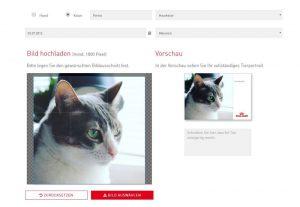 Einzigartiges Fotoshooting von Eurer Katze mit ROYAL CANIN