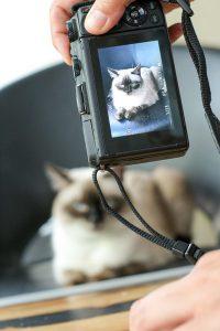 Der WOW-Katzenfoto-Workshop von Purina ONE