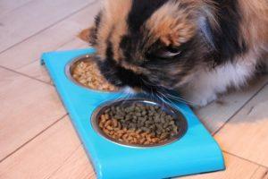 Erfahrungen mit der Purina ONE Mischfütterung