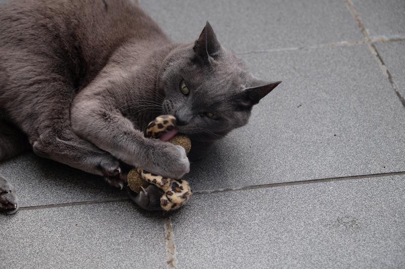 anijoy Katzenspielzeug - Unglaublicher Spaß für Athos & Portos