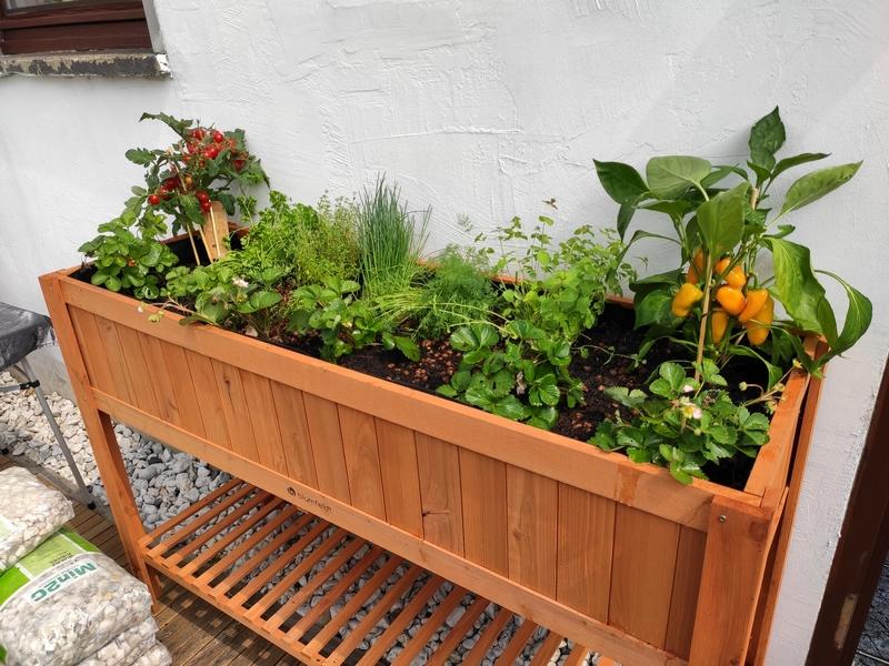 blumfeldt Altiplano Cubic Hochbeet - Tomaten, Paprika, Erdbeeren & Kräuter aus eigenem Anbau