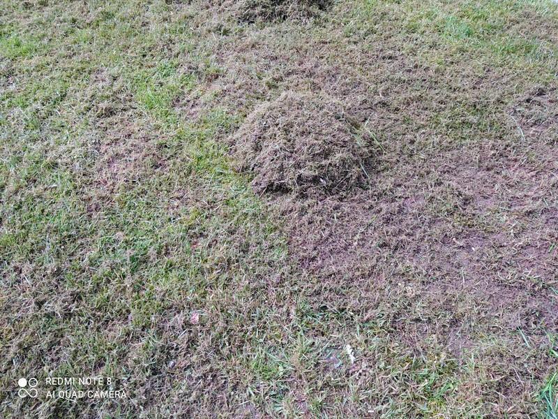 IKRA Elektro Vertikutierer & Rasenlüfter IEVL 1738 für einen gesunden Rasen